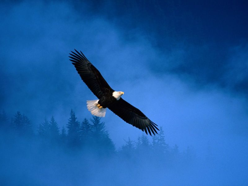 Flight_of_freedom_bald_eagle-1280x960