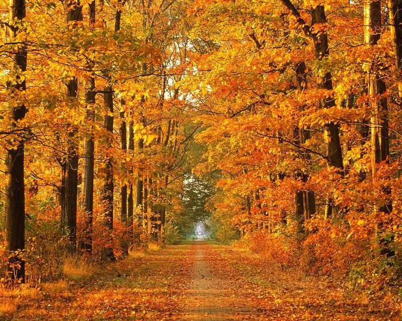Nature-In-Autumn8
