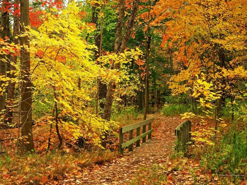 Beautiful-Fall-Wallpapers-autumn-15496213-1024-768