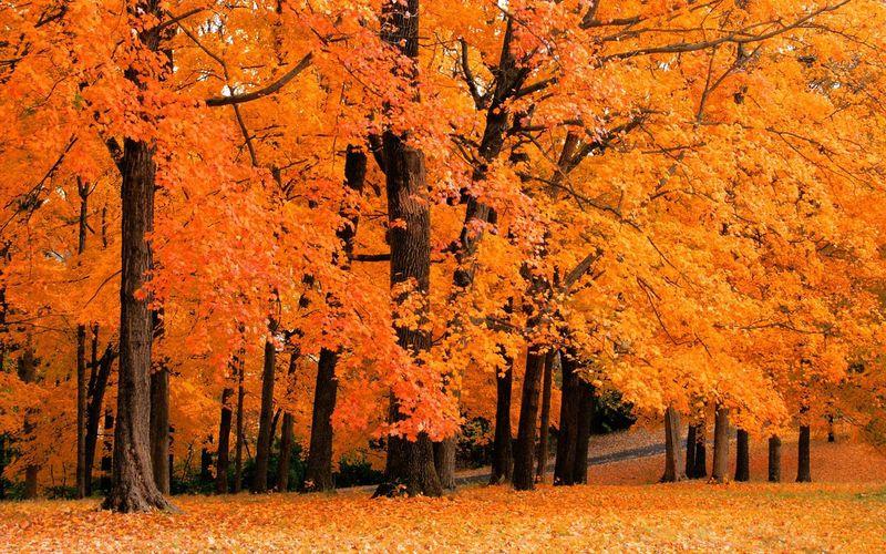 Fall-wallpaper-5