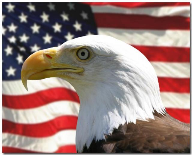 30330406_EaglewithFlagcopy_preview