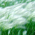 Wind-Blowing-Wallpapers-Free-Download