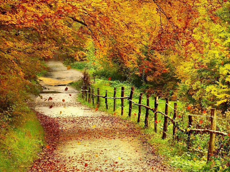 Beautiful Autumn Scenery Wallpapers 01