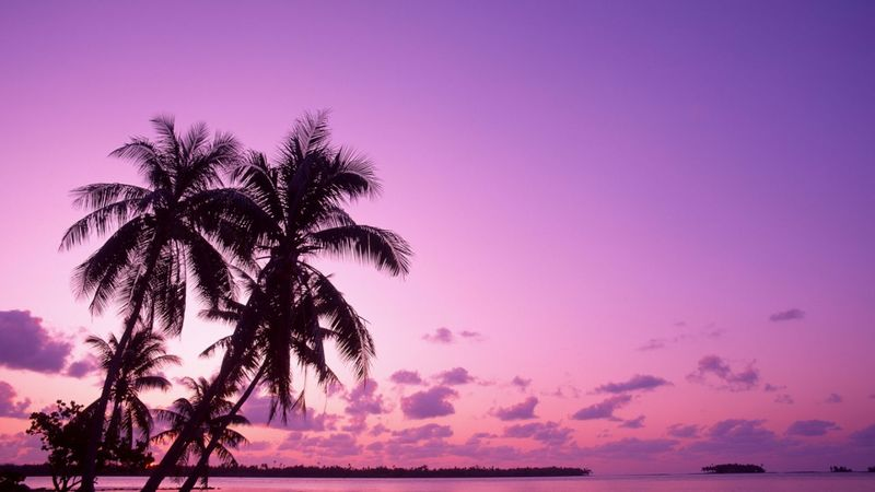 Fuschia-pink-purple-sky-sets-the-backdrop-for-silhouetted-beach-palm-trees-102978