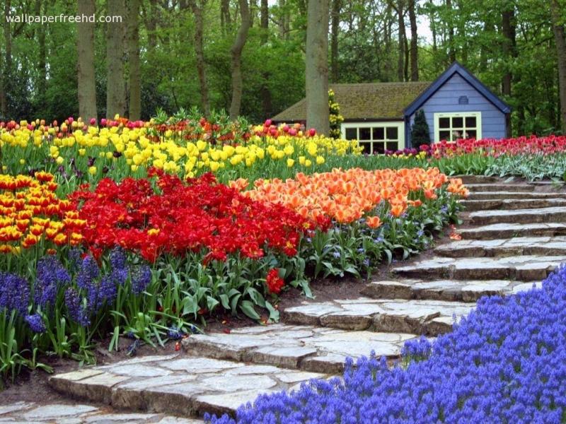 Garden wallpaper (8)