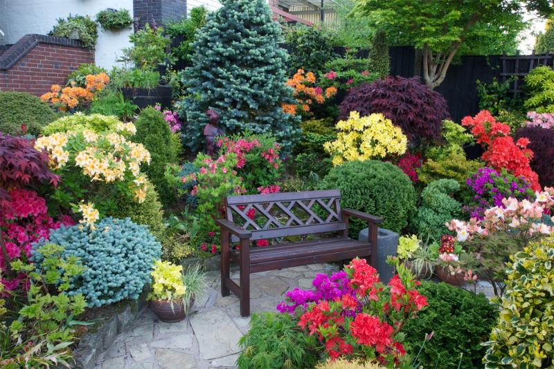 Seat amongst the azalea flowers
