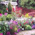 Summer-flowers