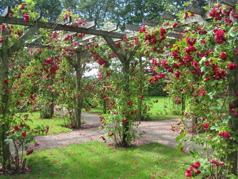 Day 3 - rose garden