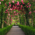 Rose garden wallpaper (7)