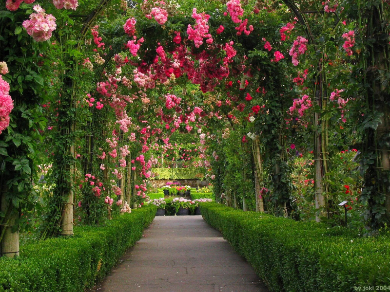 Rose garden wallpaper (7)