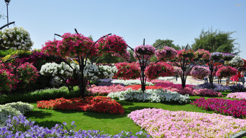 625849-flower-gardens-wallpapers-2560x1440-download-free