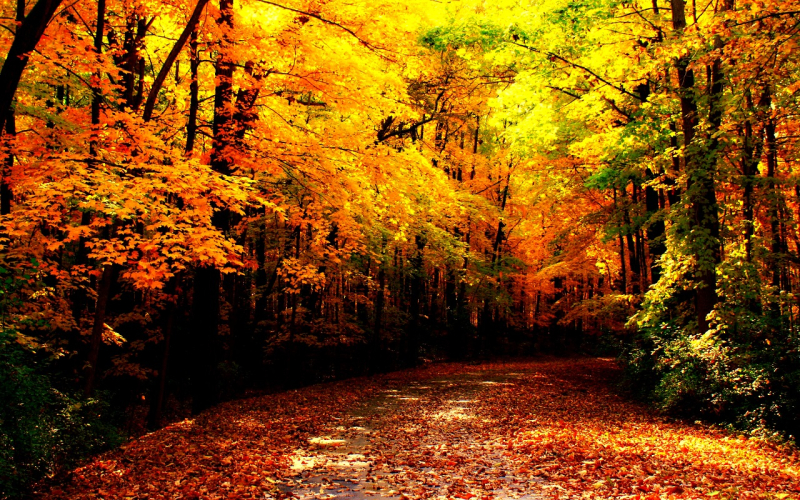 Autumn-Wallpaper-