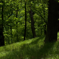 Amazing-Pictures-Of-Forest-
