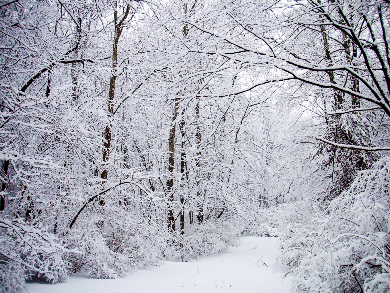 Winter-Storm-1-26-15