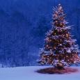 Snow covered lit tree
