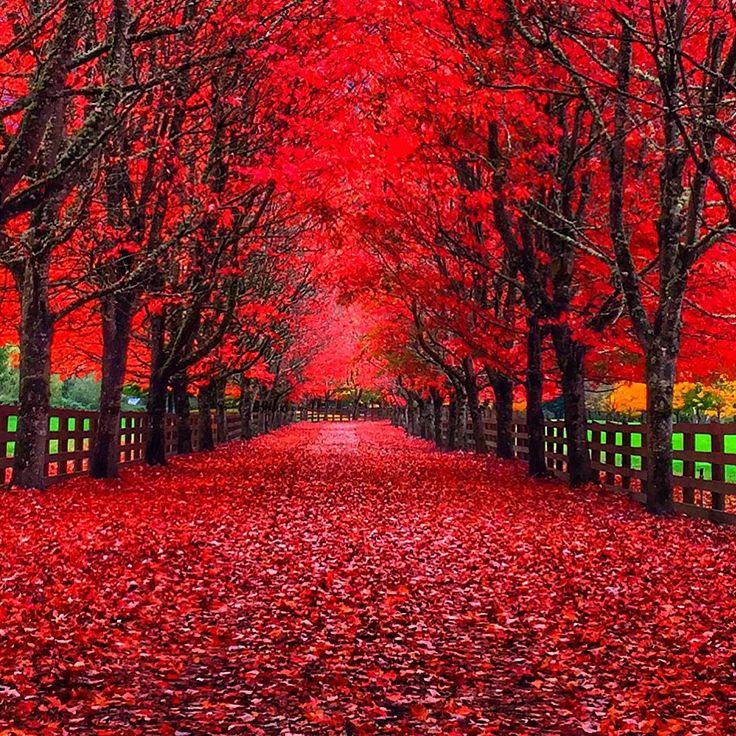 36f98e49c3bb72bc91c166f89591c8ec--red-leaves-my-favorite-color