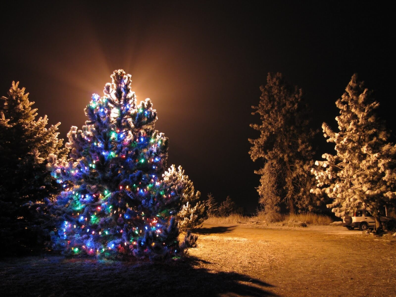 Outdoor-lighted-christmas-trees-design-all-home-design-ideas-with-outdoor-lighted-christmas-tree