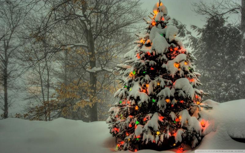 Christmas-Tree-Wallpapers-for-Windows-8-4