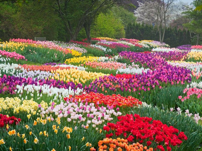 Spring_flowers_2015_longwood_cr_Longwood Gardens L Albee
