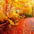 Fall wallpapers 1